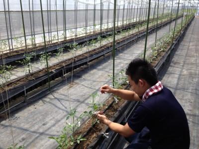 有機野菜を育てる大変さを体感