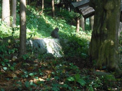 フィールドワークで出会ったサル:集落内の鎮守の森
